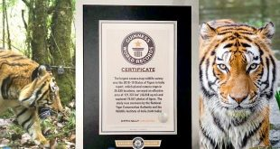 India's Tiger Census sets a New Guinness Record for being the world's largest camera trap wildlife survey.